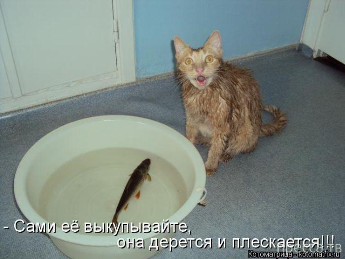 Прикольные котоматрицы, часть 4 (49 фото)