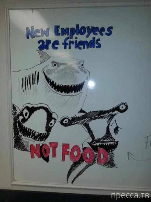 Приколы на рабочем месте (35 фото)