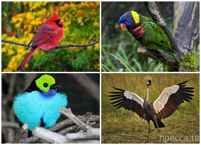 Топ 10: Самые красивые птицы в мире (11 фото)