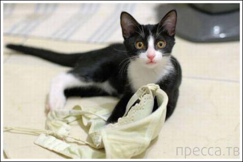 Кошки против бюстгальтеров (21 фото)