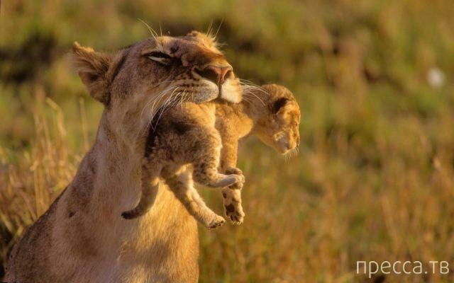 Милые и забавные животные, часть 67 (48 фото)