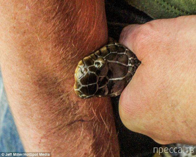 Тим Фриде выработал иммунитет к змеиному яду (8 фото)
