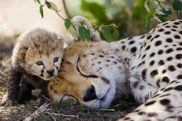 Милые и забавные животные, часть 69 (45 фото)