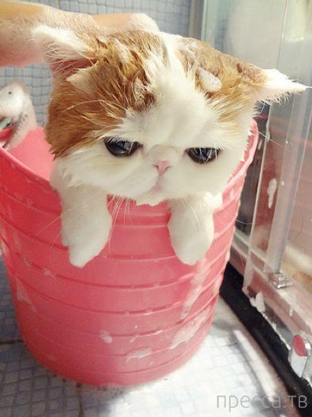 Прикольный китайский котик Снупибейб собрал армию фанатов (13 фото)
