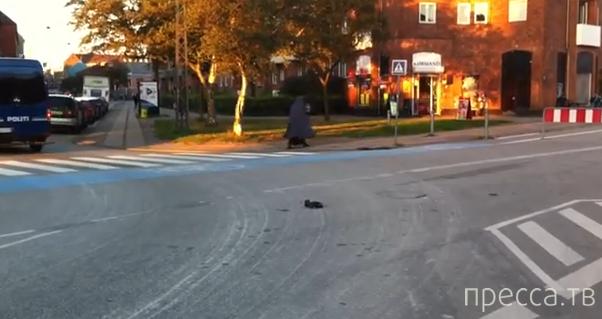 Полиция убила танцующего голубя... Копенгаген