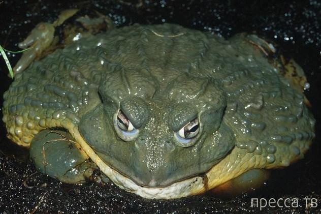 Топ 10: Самые малоизвестные крупные животные (10 фото)
