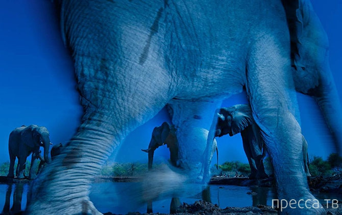 Победители Конкурса фотографий дикой природы 2013 ... (18 фото)