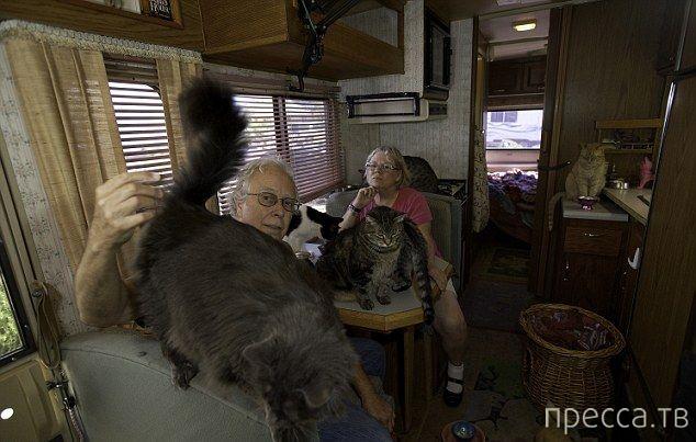 Настоящий кошкин дом в Сан-Диего (7 фото)