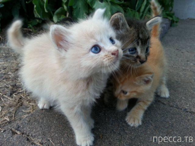 Милые и забавные животные, часть 72 (41 фото)
