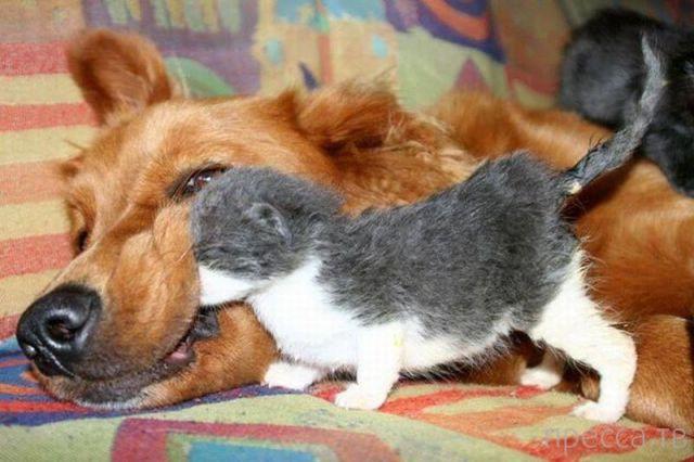 Милые и забавные животные, часть 73 (35 фото)