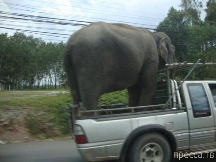 Чудеса перевозок (27 фото)