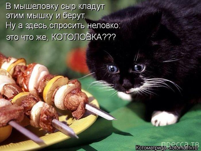 Прикольные котоматрицы, часть 6 (50 фото)