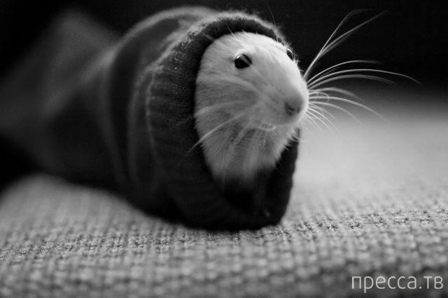 Милые и забавные животные, часть 74 (44 фото)