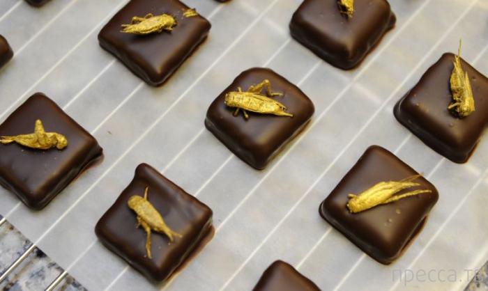 Конфеты с насекомыми от французского шоколатье  Сильвиана Мускуара  (8 фото)