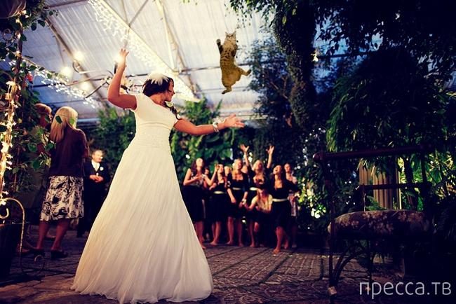 Новый Интернет-мем: кошка вместо букета невесты! (5 фото)
