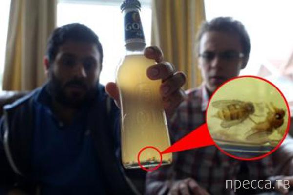 Неожиданная находка в любимом пиве (4 фото)