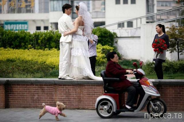 Подборка прикольных фотографий со свадеб (61 фото)