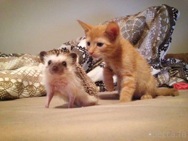 Милые и забавные животные, часть 78 (43 фото)
