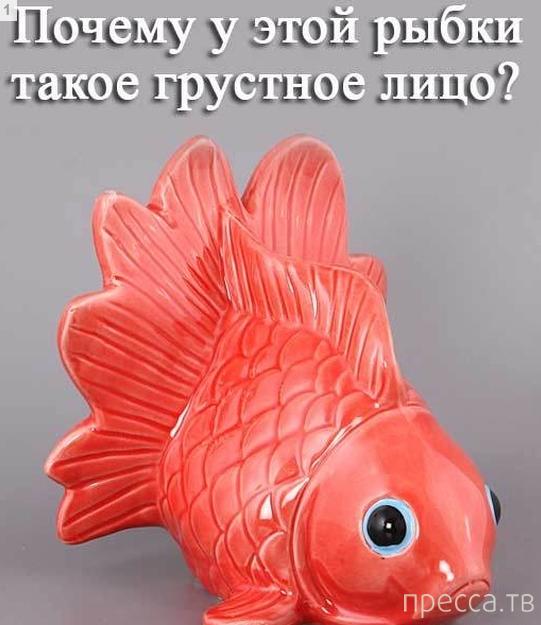 Это очень грустная рыбка. Чем она так опечалена? Ответ далее (4 фото)