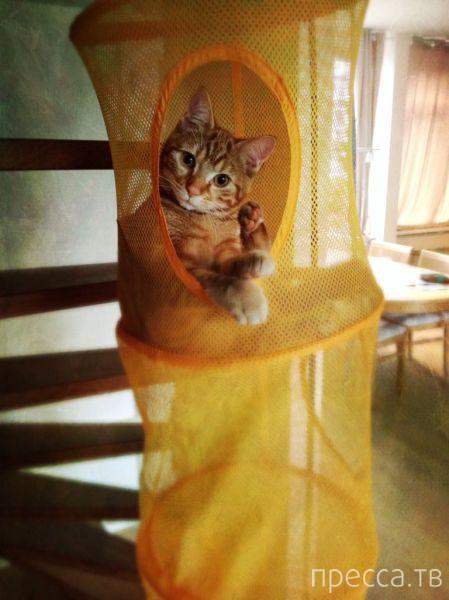 Милые и забавные животные, часть 77 (43 фото)