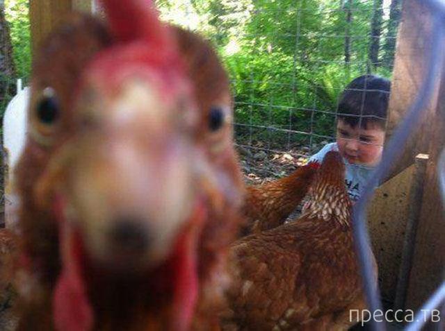 Прикольные фотобомбы с животными (23 фото)