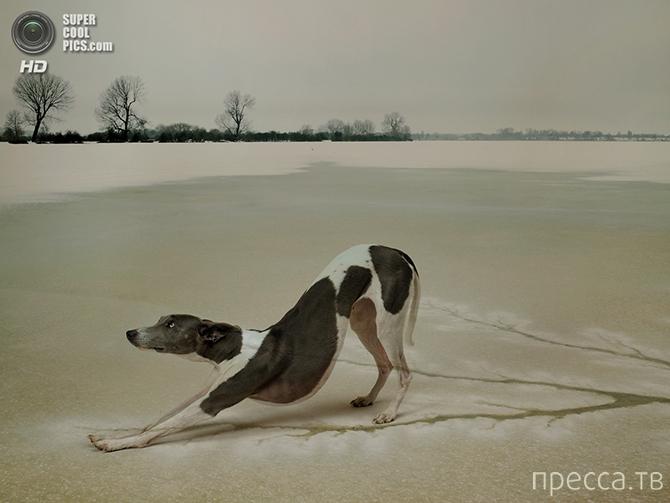 Победители фотоконкурса Association of Photographers Awards (25 фото)