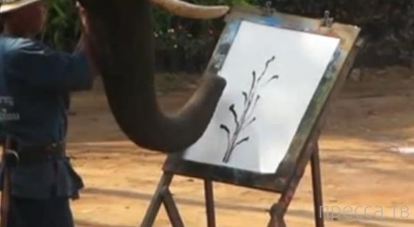 Слон рисует хоботом картину...