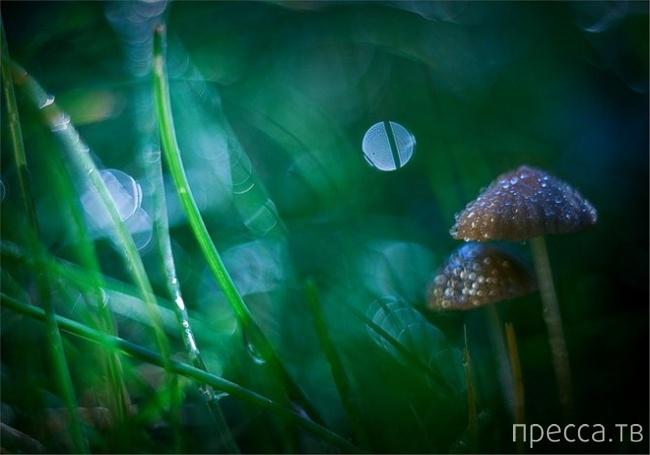 Сказочный мир в макрофотографиях Магдалены Васичек (22 фото)