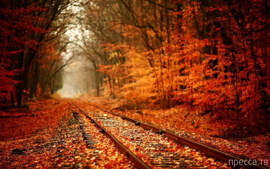 Осенние фотографии, которые стали хитами в блогах (10 фото)