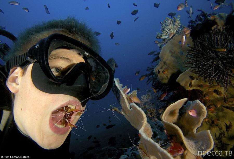 Креветки чистят зубы дайверу (9 фото)