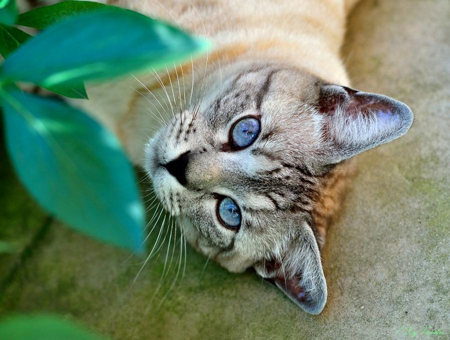 Топ 10: Невероятные факты о языке животных