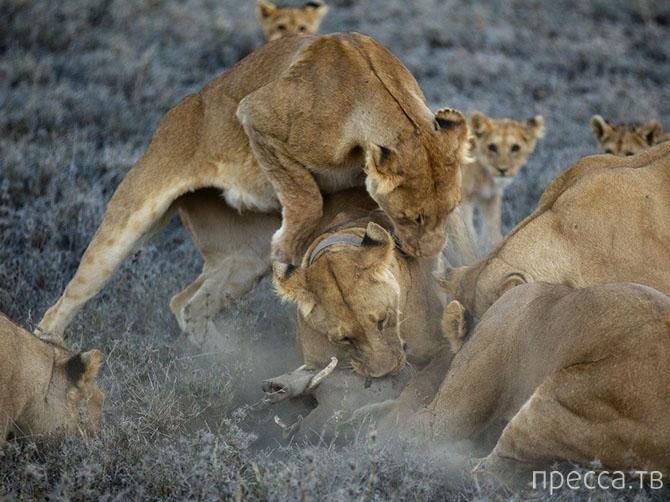 Лучшие фотографии октября 2013 от National Geographic (21 фото)