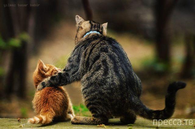 Милые и забавные животные, часть 82 (44 фото)
