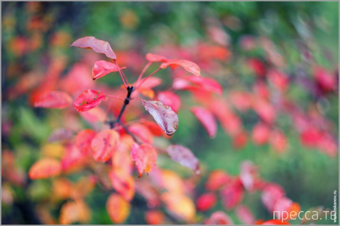 Осень в Адыгеи от фотографа Осканова... (13 фото)