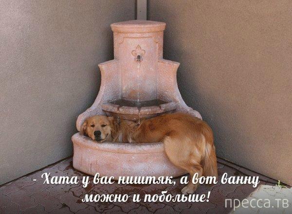 Прикольные картинки с животными, часть 3 (23 фото)