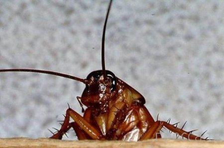 Топ 5: Самые опасные для человека живые существа (6 фото)