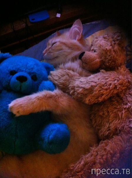 Милые и забавные животные, часть 86 (45 фото)