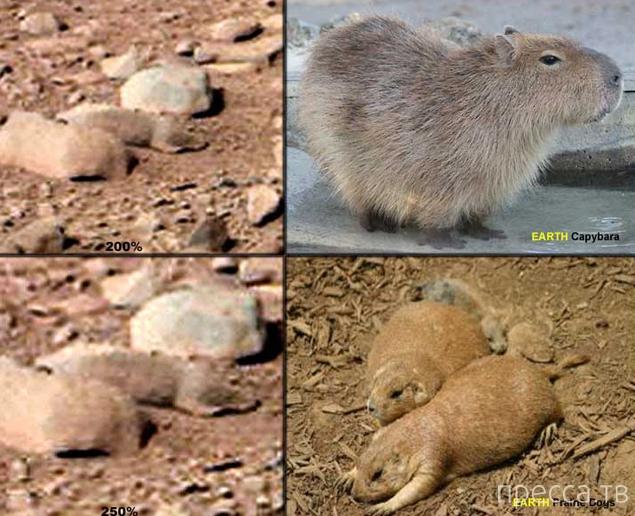 На Марсе снова нашли ящерицу (6 фото)