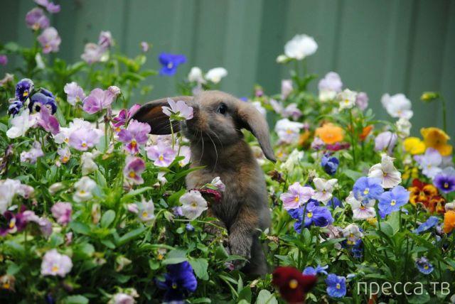 Милые и забавные животные, часть 89 (43 фото)