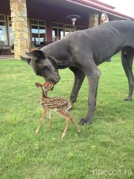 Милые и забавные животные, часть 90 (45 фото)