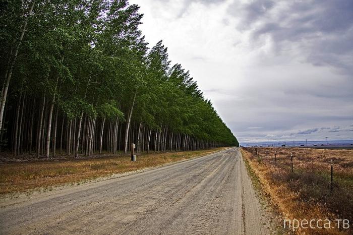 Экскурсия на лесоферму в штате Орегон (16 фото)