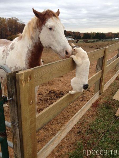 Милые и забавные животные, часть 91 (49 фото)