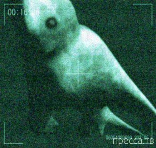 Японские исследователи обнаружили в Антарктике гигантского гуманоида (2 фото + 2 видео)