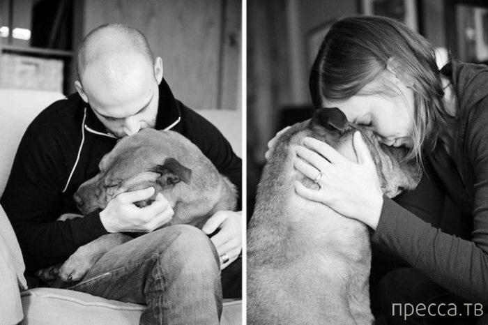 Прощание хозяев со своими собаками (16 фото)