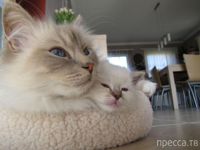 Милые и забавные животные, часть 92 (47 фото)