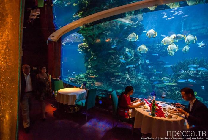 Подводный ресторан в Дубае (20 фото)
