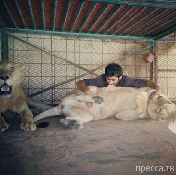 Арабский миллионер и его дикие кошечки (29 фото)