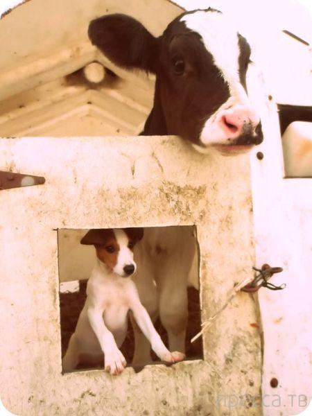 Милые и забавные животные, часть 95 (42 фото)