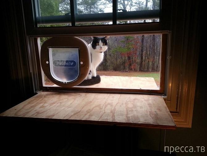 Топ 16: Наиболее интересные факты о кошках (16 фото)