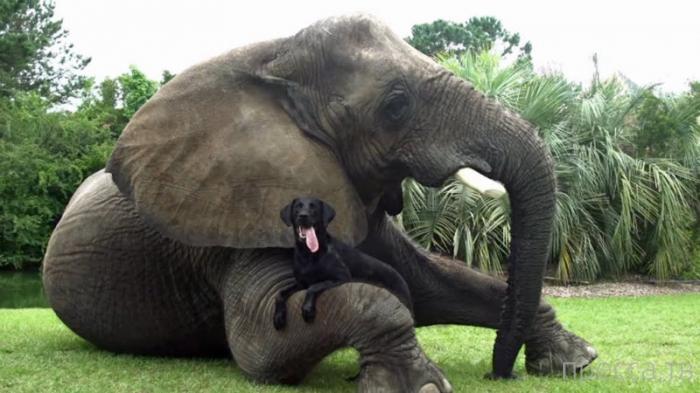 Слон и пес - лучшие друзья (6 фото)